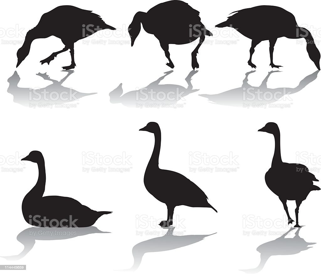 Silhouettes de bernaches du Canada - Illustration vectorielle