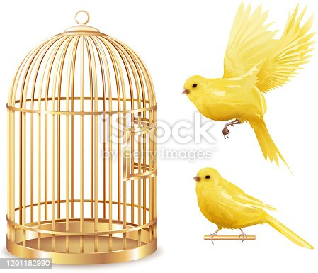 Canary birdcage set of isolated empty gold covered cage and realistic canarybird images on blank background vector illustration