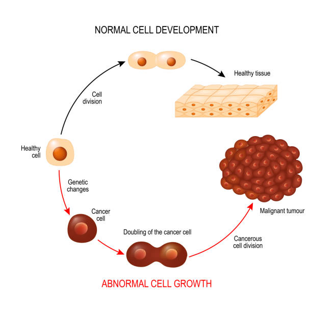 Cancer cell and normal cell. Healthy tissue and Malignant tumour. Cancer cell and normal cell. Healthy tissue and Malignant tumour. illustration showing cancer disease development. Vector diagram for your design, educational, biological, science and medical use cancer illness stock illustrations