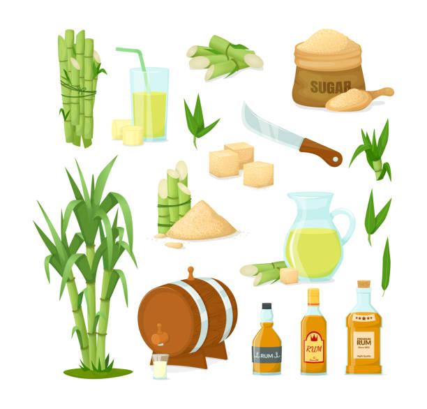 ilustrações de stock, clip art, desenhos animados e ícones de cane sugar with stem and leaf plants vector cartoon illustration - açúcar