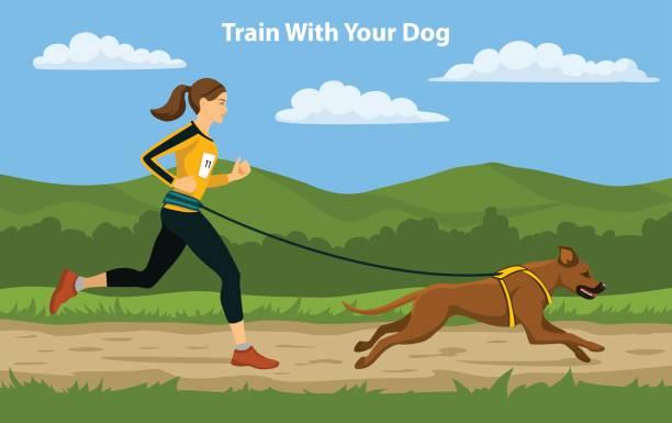 canicross sport cross country training. frau mit ihrem hund rhodesian ridgeback im freien laufen. - langstreckenlauf stock-grafiken, -clipart, -cartoons und -symbole