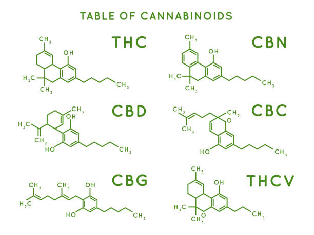 illustrazioni stock, clip art, cartoni animati e icone di tendenza di cannabinoid structure. cannabidiol molecular structures, thc and cbd formula. marijuana or cannabis molecules vector illustration - antidolorifico