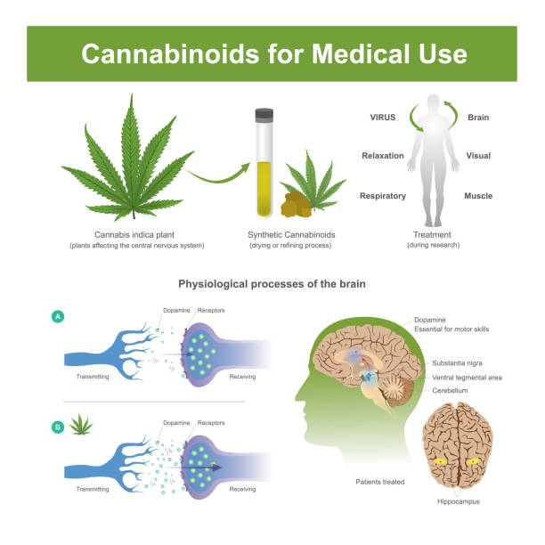 Cannabinoids for Medical Use. Research has found that cannabis indica plant can have the following effects receptor stock illustrations