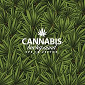 Cannabis background