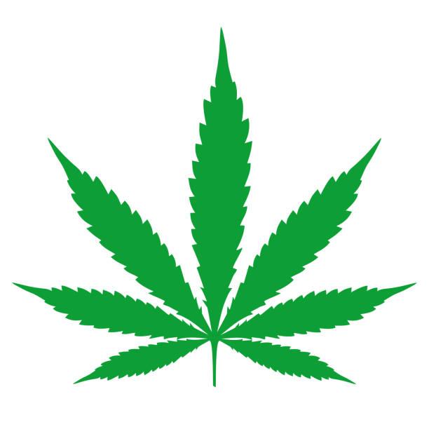 Cannabis leaf illustration Cannabis leaf illustration marijuana stock illustrations