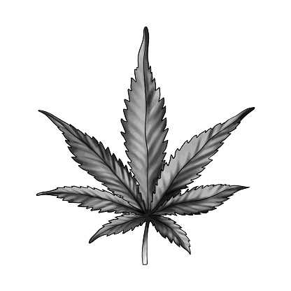 A Cannabis Leaf Isolated On A White Background Black And White Marijuana Leaf Ganja Is A Rastafarian Symbolvector Stock Illustration Download Image Now Istock
