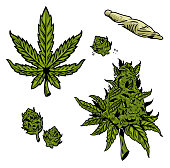 Cannabis graphic set with vintage drawing marihuana hemp leaf for oil textile smoking extract clothes embroidery medical rastaman style. Retro illustration for poster sticker patch print t shirt.