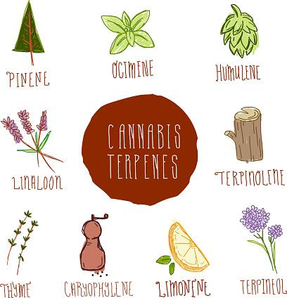 Cannabis Marijuana Terpinene icon set with text