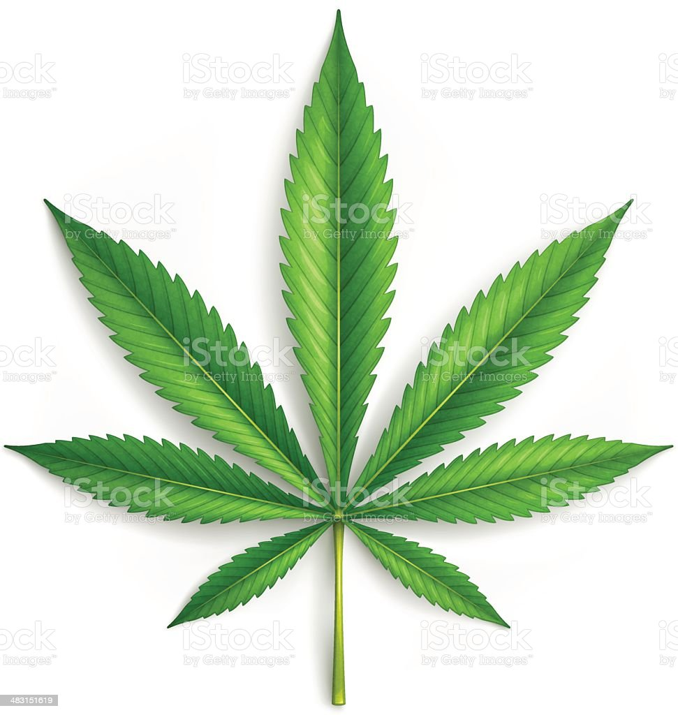 Cannabis vector art illustration