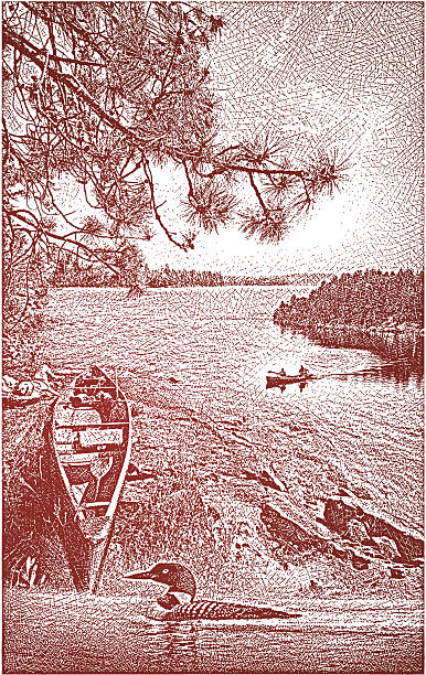 Canoe, Lake and Loon Etching illustration of Boundary Waters Canoe Area. Lake, white pine, canoes, and Common Loon. Woman lying down resting to left of canoe. loon bird stock illustrations