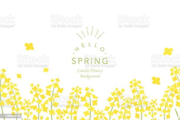 Canola flowers background illustration vector id1128885253?b=1&k=6&m=1128885253&s=612x612&h=em6ihx45ovofwekjqdoemfixhdh8bshyel9pri ee u=