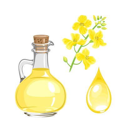 Canola seed oil in glass bottle, yellow flower and drop isolated on white. Vector illustration. Cartoon flat style.