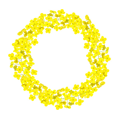 Canola wreath Rapeseed garland blossom flowers card. template copy space text. Flowering colza chaplet.