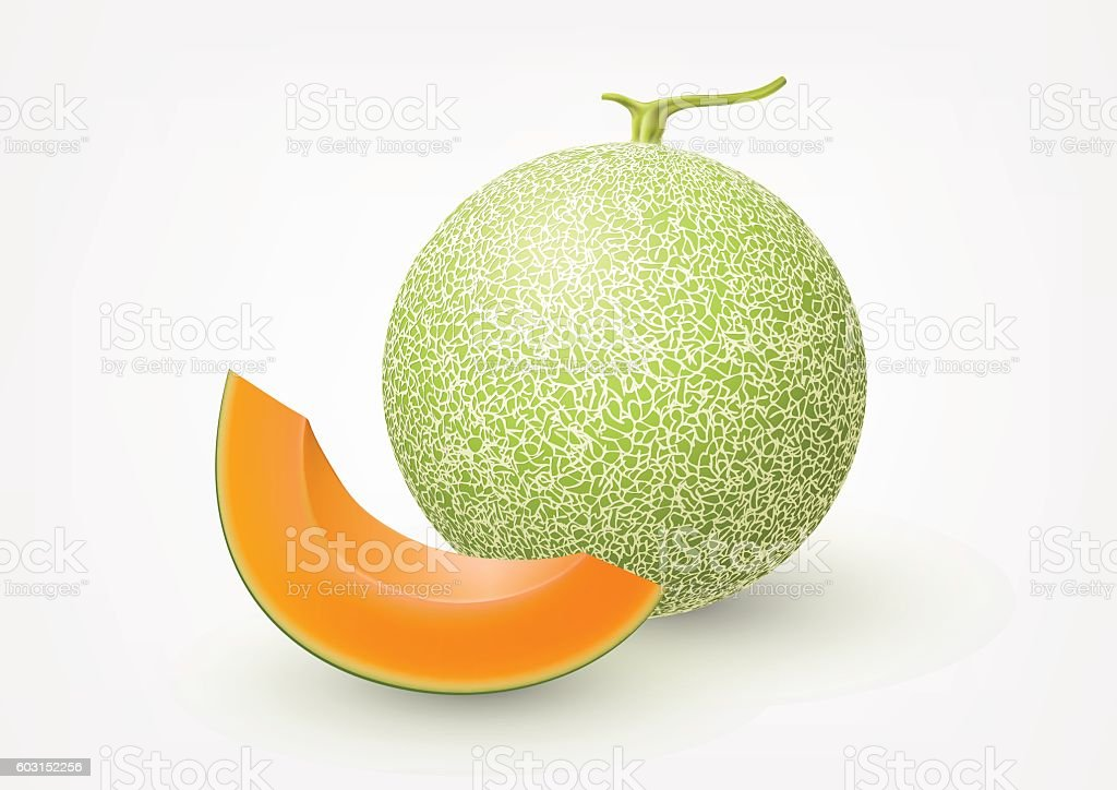 Cantaloupe melon, fruit vector illustration vector art illustration