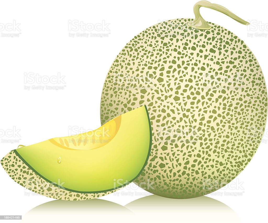 cantaloupe melon. vector illustration vector art illustration