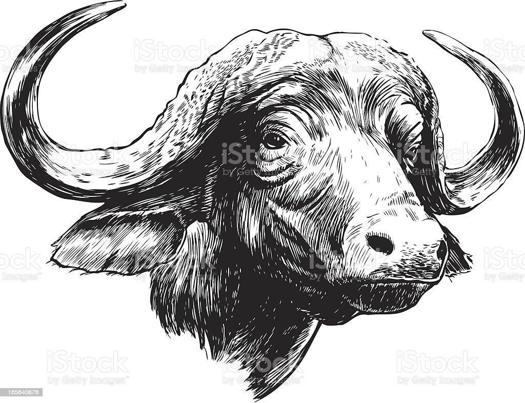 Cape Buffalo B&W vector art illustration
