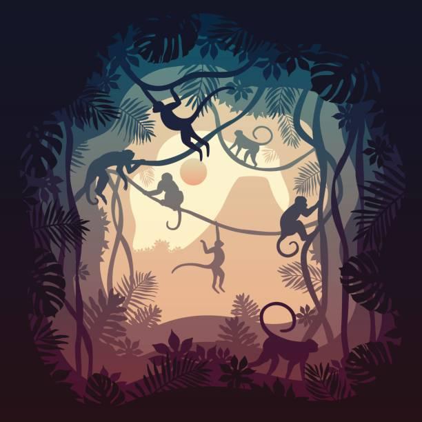 ilustrações, clipart, desenhos animados e ícones de terra de capuchinhos - macaco