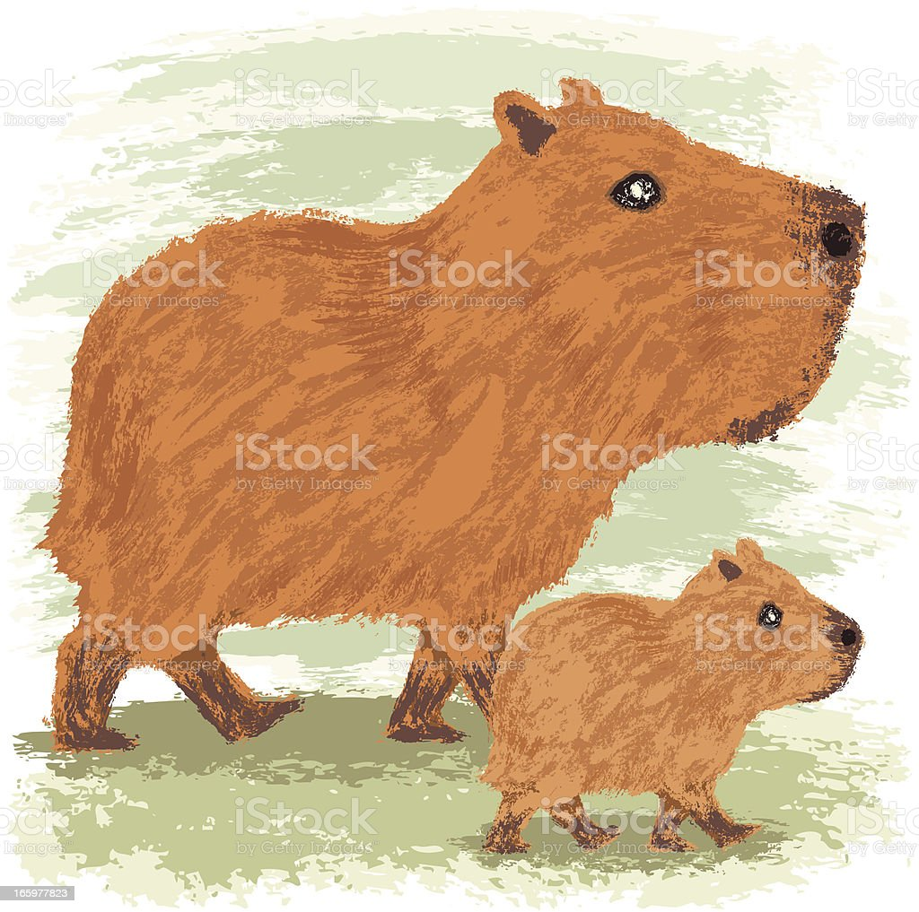Capybara vector art illustration