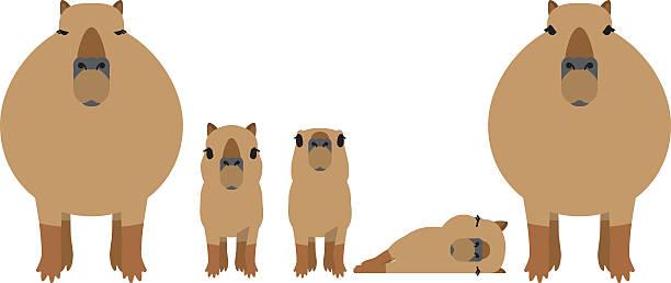 Vectores de Capibara y Illustraciones Libre de Derechos - iStock