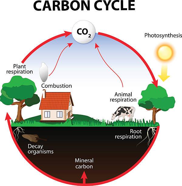 carbon cycle - stoffwechsel stock-grafiken, -clipart, -cartoons und -symbole