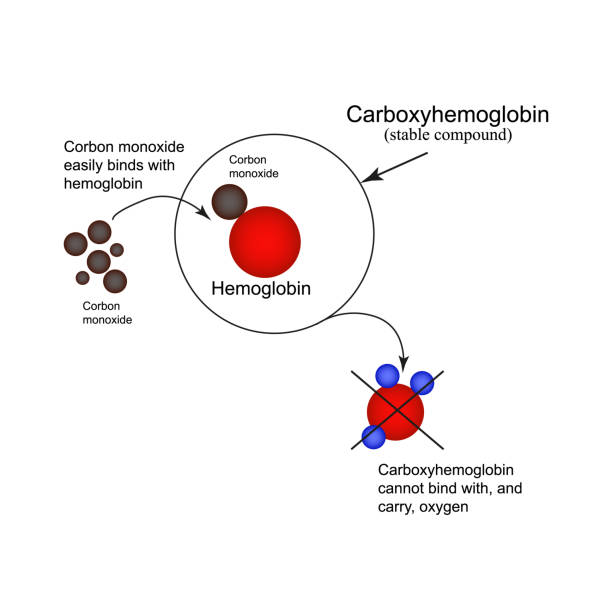 Carboxyhemoglobin. Joining the hemoglobin carbon monoxide. The inability to transport oxygen. Carbon monoxide poisoning. Infographics. Vector illustration Carboxyhemoglobin. Joining the hemoglobin carbon monoxide. The inability to transport oxygen. Carbon monoxide poisoning. Infographics. Vector illustration. hemoglobin stock illustrations