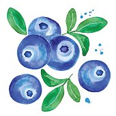 Card of a watercolor blueberry. Hand painted realistic illustration on paper. Vintage vector forest berry isolated on white background.