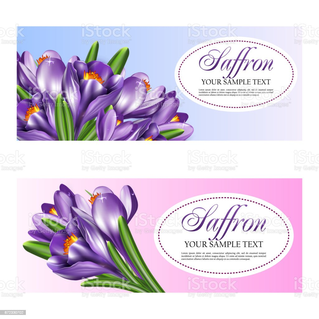 Card or invitation with the flowers of saffron. Vector illustration with bouquet of crocuses