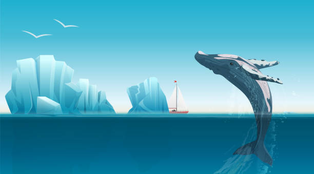 Card template with whale jumping under the blue ocean surface near icebergs. Winter arctic vector illustration. Iceland. Card template with whale jumping under the blue ocean surface near icebergs. Winter arctic vector illustration beluga whale stock illustrations