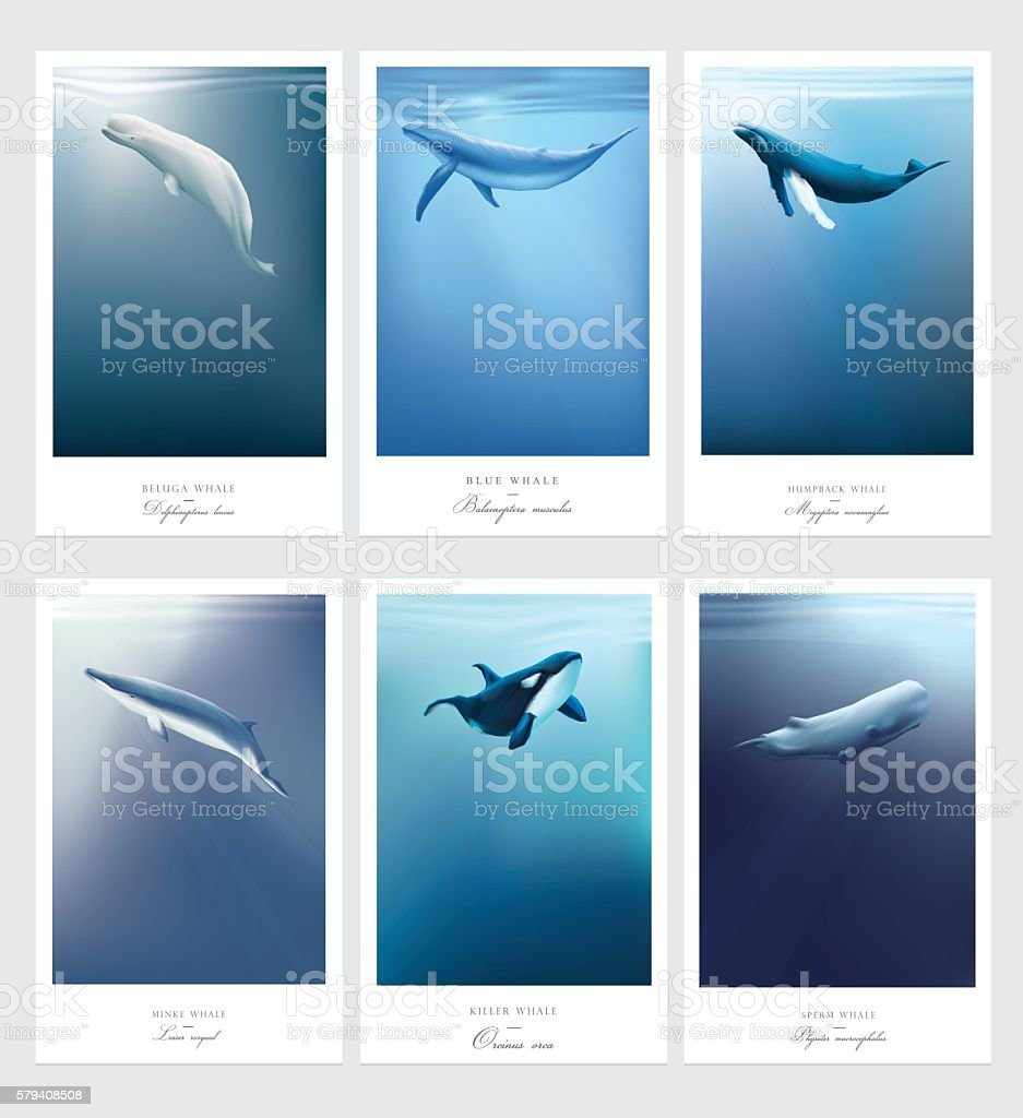 Card templates with whales swimming under the blue ocean - ilustración de arte vectorial