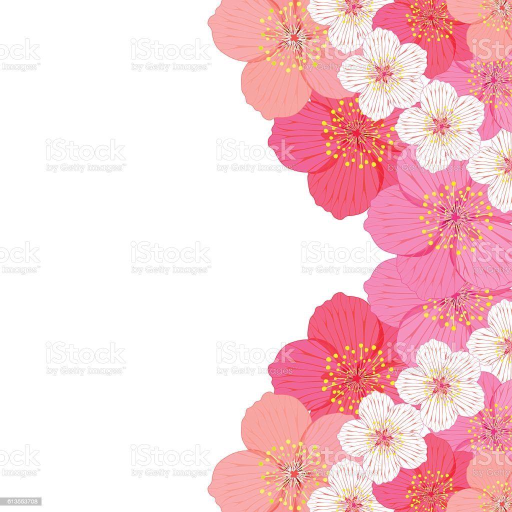 card with flowers of Japanese of cherries. vector illustration vector art illustration