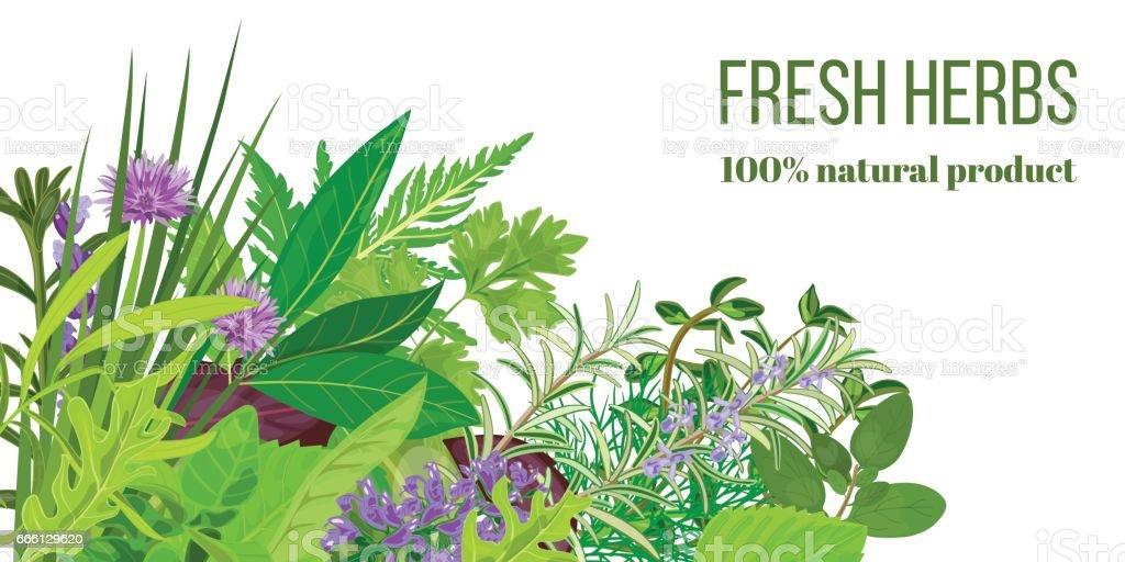 Carte Avec Tas De Realiste Populaires Herbes Culinaires Logo La Boutique A Base