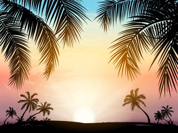 karta z realistyczną sylwetką palm na tropikalnym grunge sunset beach background. - zachód słońca stock illustrations