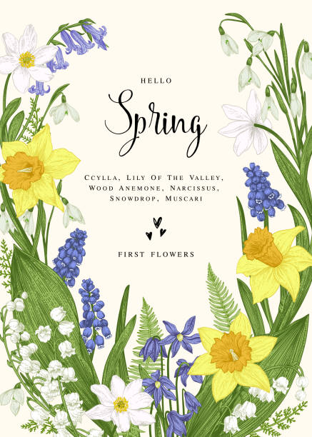 Card with spring flowers. Floral wreath with spring flowers. Vector vintage botanical illustration. Narcissus, lily of the valley, anemone, scylla, snowdrop, muscari. lily of the valley stock illustrations