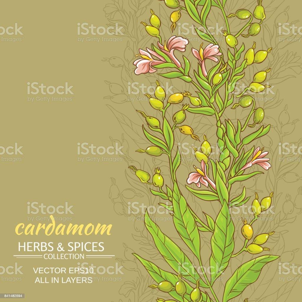 cardamom vector background vector art illustration