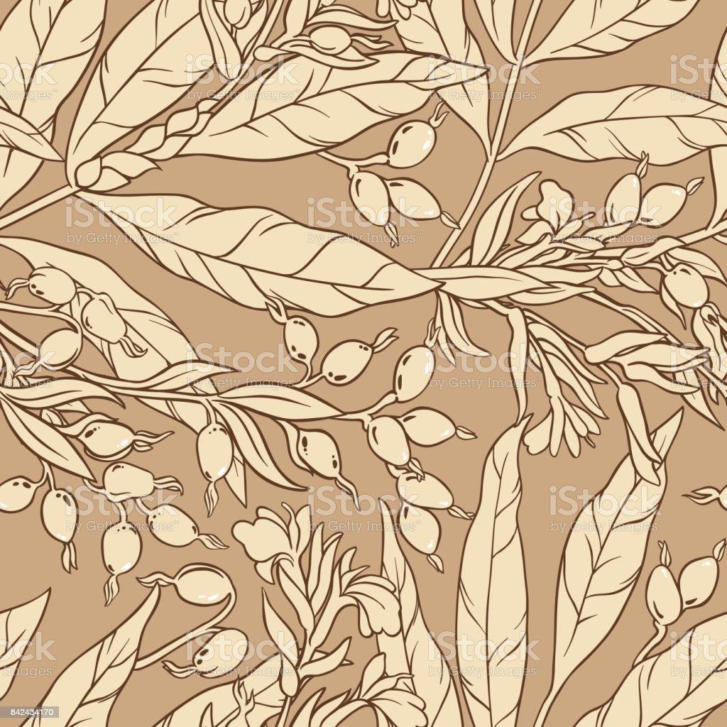 modèle vectoriel de cardamome - Illustration vectorielle