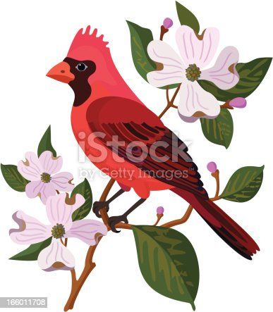A vector illustration of a cardinal and dogwood. The cardinal is the state bird of Virginia, USA and the dogwood is the state flower.