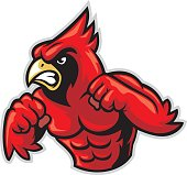 cardinal bird mascot show his muscle