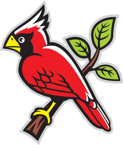 cardinal bird on a tree branch - cardinal mascot stock illustrations, clip art, cartoons, & icons