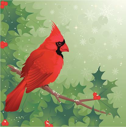 Cardinal Vogel Sitzt Auf Holly Branch Im Winter Stock Vektor Art und mehr Bilder von Ast - Pflanzenbestandteil