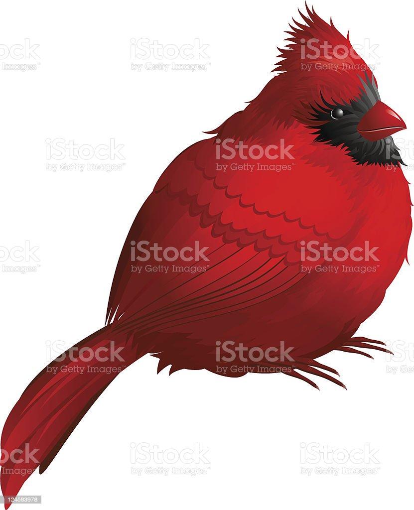 Cardinal bird royalty-free cardinal bird stock vector art & more images of animal