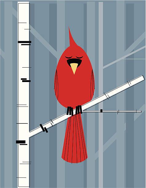 кардинал на ветви березы - four seasons stock illustrations