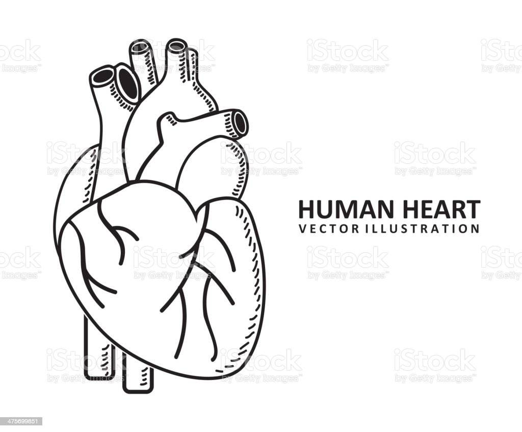 Cardiology Design royalty-free stock vector art