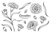Carnation flower and leaf hand drawn botanical illustration with line art on white backgrounds. Design decor for card, save the date, wedding invitation cards, poster, banner.
