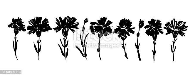 Carnation hand drawn paint vector set. Ink drawing flowers and plants, monochrome artistic botanical illustration. Isolated floral elements, hand drawn illustration. Brush strokes silhouette.