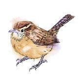 istock Carolina Wren Drawn in Pen and Ink. EPS10 Vector Illustration 1267533751