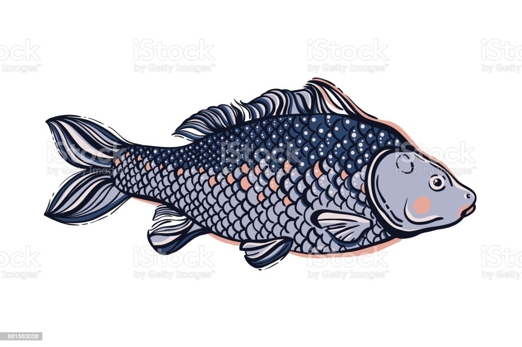 Carp. Chinese symbol of good luck, courage, persistence, perseverance, wisdom and vitality. Vector illustration. vector art illustration