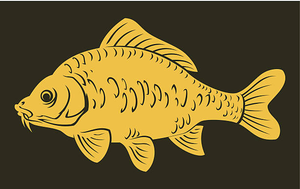 stockillustraties, clipart, cartoons en iconen met carp fish - carp