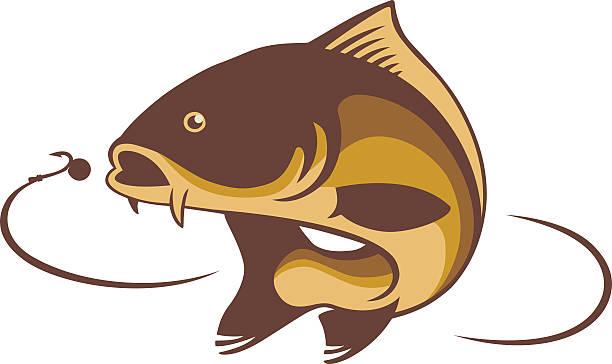 carp fish - redfish stock illustrations, clip art, cartoons, & icons