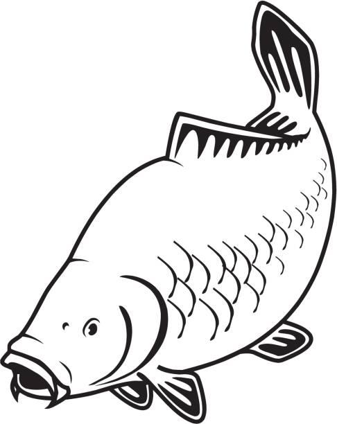 stockillustraties, clipart, cartoons en iconen met karper vissen - carp