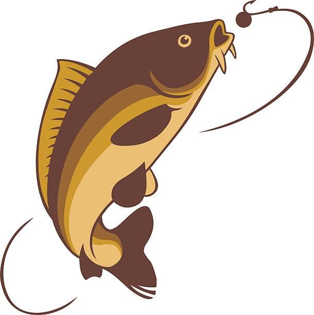 stockillustraties, clipart, cartoons en iconen met carp fishing - carp